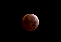 """Blood Moon"" April 2015 from Novato, CA"